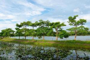 árboles y nenúfares foto