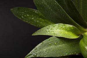 los detalles de las texturas de las plantas de interior foto