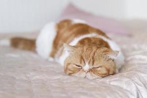 Cute cat enjoying at home photo