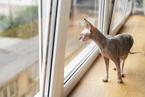 lindo gato disfrutando en casa foto