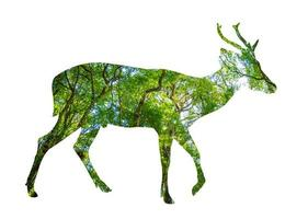 Forest silhouette in the shape of a wild animal photo