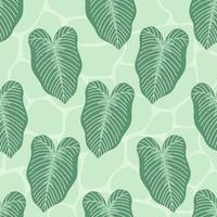 planta tropical caladium lindenii deja patrones sin fisuras vector