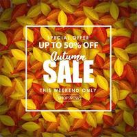 Special Autumn sale with writing on fallen leaves. vector