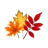 Autumn Falling Leaves Icon Isolated on White Background. vector