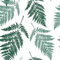 Fern leaf seamless pattern background. Vector Illustration