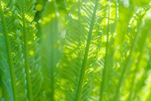 Abstract Beautiful tropical green foliage focuses only photo
