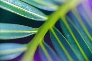 Resumen hermoso follaje verde tropical se enfoca solo foto