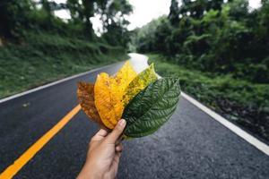 hoja de otoño en bosque verde, camino al bosque foto