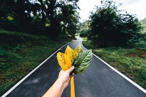 Autumn leaf in green forest, road to forest photo