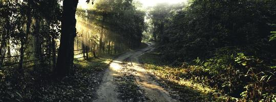 Foggy road in rural village in the morning, forest road photo