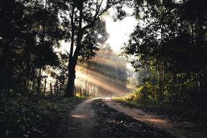 Camino brumoso en aldea rural por la mañana, camino forestal foto