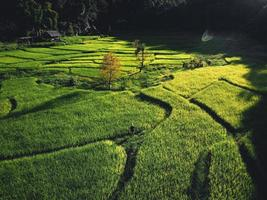 Landscape Paddy rice field in Asia, aerial view photo