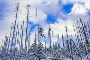 Morir bosque plateado nevado en el paisaje de la montaña brocken harz alemania foto