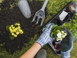 Overhead view hand holding small fresh potted plant. Resolution and high quality beautiful photo