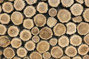 Front view tree trunks. Resolution and high quality beautiful photo