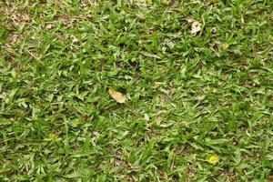 Fondo de hierba de hojas grandes a la luz del sol foto