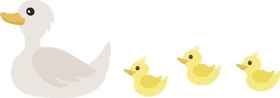 Cute ducklings following mama duck. Swans isolated on white. vector