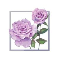 A Frame of Purple rose Watercolor Vector