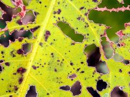 The bite worm holes on leaves photo