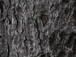 textura de madera oscura en el jardín foto