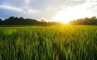 Green rice field rainy season and sunset beautiful natural scenery photo