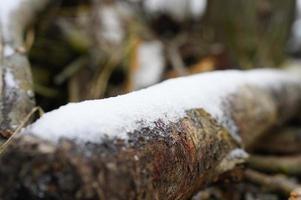 pequeña nieve invierno foto