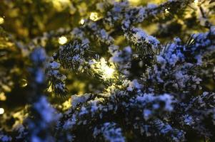 Christmas tree glowing lights decorated photo