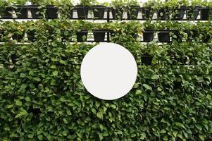 Mock up Blank white of signboard on plants wall space photo