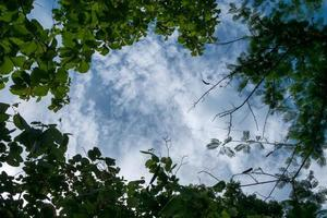 Branch tree with blue sky background on the nature photo