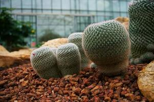Beautiful succulents and cactus plant in garden. photo