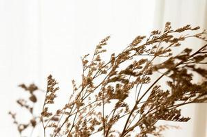 ramas secas con fondo blanco. con espacio de copia. foto