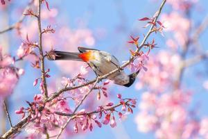 Bird hanging upside down to eat nectar from pink flower. photo