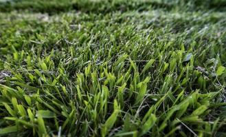 Dry grass background photo