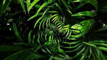 Tropical green leaf photo