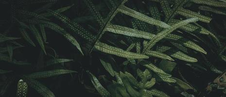 Tropical green leaf background, Dark tone theme. photo
