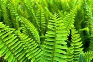 Cerrar imagen fotográfica de hojas de helecho espada foto