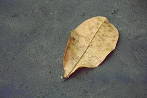 Dry leaves on the beach photo