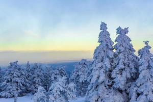 atardecer bosque paisaje helados abetos brocken montaña alemania. foto