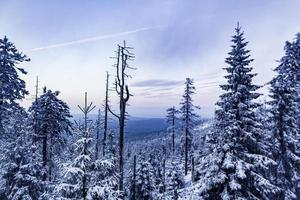 paisaje forestal por la noche abetos helados montaña brocken alemania. foto