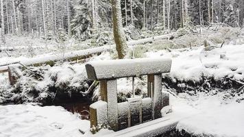Nevó en abetos paisaje de vapor montaña brocken harz alemania foto