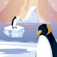 pingüinos animales iceberg polo norte mar diseño vector