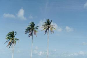 Palmeras tropicales cocoteros en el cielo del atardecer foto