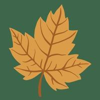 Simplicity maple leaf freehand drawing flat design. vector