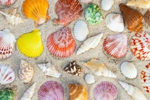 Sea Shell on sands. summer time background. photo