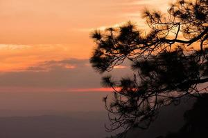 silhouette of Pine tree at the hill with sunset. photo