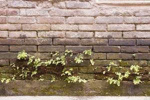 La ruina de la pared de ladrillo y la naturaleza de la hoja de la planta verde. foto