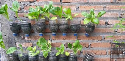 plantas en macetas en la pared foto