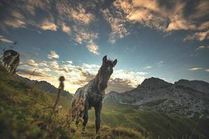 Horse on the Italian Alps at the first light of day photo