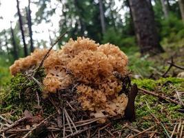 setas en el suelo de un bosque foto