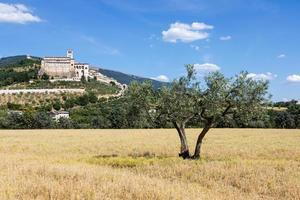 Olivos en el pueblo de Asís en la región de Umbría, Italia. foto